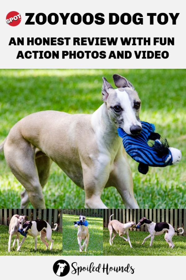 Spot Zooyoos Dog Toy Fun And Review Dog Toys Dogs Beautiful Dogs
