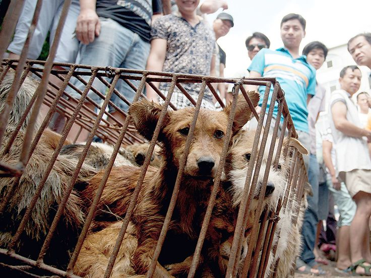#Yulin. 'It's a Dog Torture Festival': Ricky Gervais, Gisele Bündchen and Ruby Rose Slam Chinese Festival that Slaughters Pets for Meat http://www.people.com/article/ricky-gervais-celebrities-slam-yulin-china-dog-eating-festival