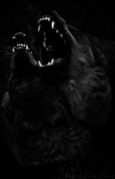 My dream was in was surrounded by tall green corn field, which grows where I live and i was being pulled on a sled of sort by lil wolves. I remember seen black scary wolves on both sides, growling and staring at me. i was so scared, but for some reason they let me through. ohh the pictures give me chills.