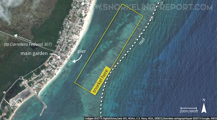 All you need to know about snorkeling Puerto Morelos coral reef: how to get there, where to snorkel, what to see.