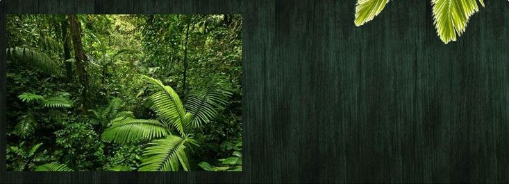 Ecopalms.org :: Welcome to EcoPalms