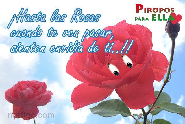 u00a1hasta las rosas cuando te ven pasar  sienten envidia de