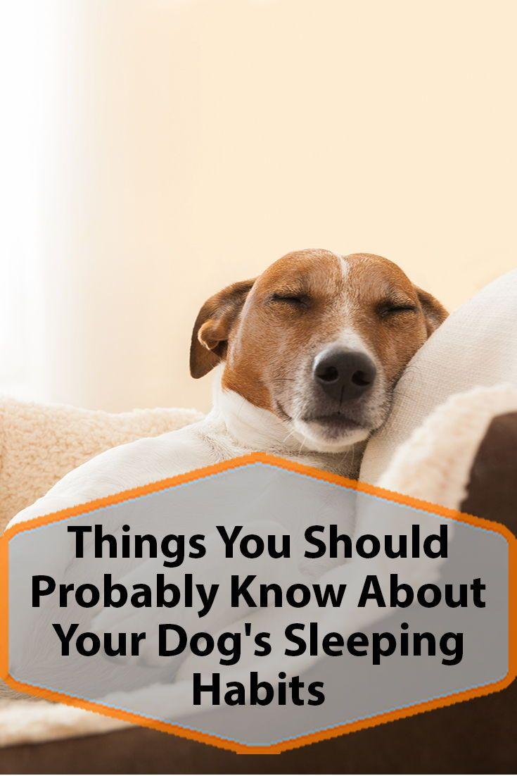 Your Dog S Sleeping Habits Sleeping Dogs Sleeping Habits Your Dog
