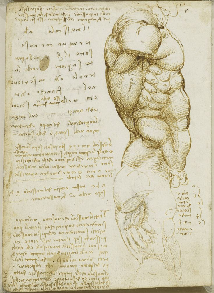 The muscles of the torso Leonardo da Vinci (Vinci 1452-Amboise 1519)    #TuscanyAgriturismoGiratola