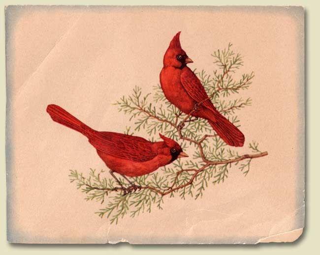 Vintage Cardinal 99