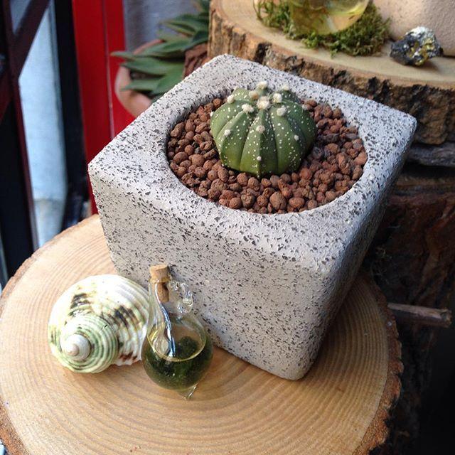 Teraryum kolyeler ve el yapımı seramik saksılar için atölyemizi ziyaret edebilir ya da bize info@terraquadesign.com adresinden ulaşabilirsiniz  #terraquadesign #cactus #astrophytumasterias #handmade #ceramics #seramik #pottery #pot #terrarium #necklace #glass #elyapimi #unique #moss #yosun #plantaddiction #cactusmagazine #cactilove #tagsforlikes #instacool #lovegreen #nature #gift #spring #plant #nofilter #decorative #homedecor #istanbul
