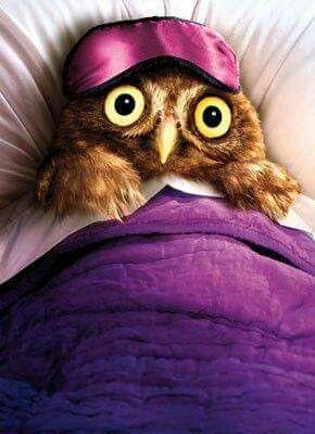 Sleep won't come Owl ~