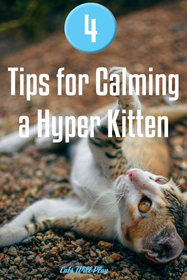 1ef1fcfa6063bcfcda7aa03ab67c47bb - How Do You Get A Cat To Calm Down