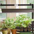 What Are The Top 5 Indoor Herb Garden Kits: Tabletop Garden Light