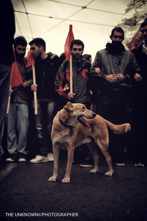 Loukanikos, the Greek Revolutionary (dog)
