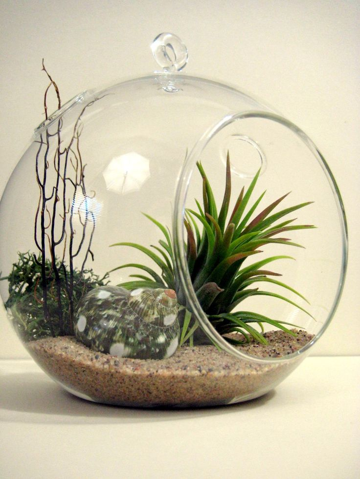 spotted turbo air plant terrarium. Black Bedroom Furniture Sets. Home Design Ideas