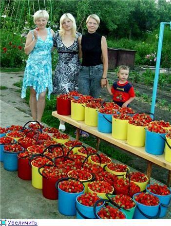 Выращивания цветной капусты в открытом грунте 67