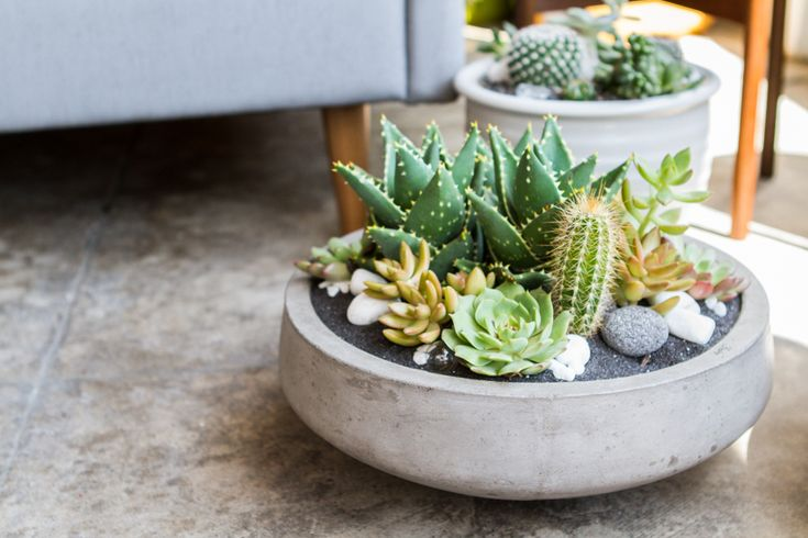 Succulents and Cacti at Pigment on the BLOG #succulents #cacti #shoppigment #pigmentblog
