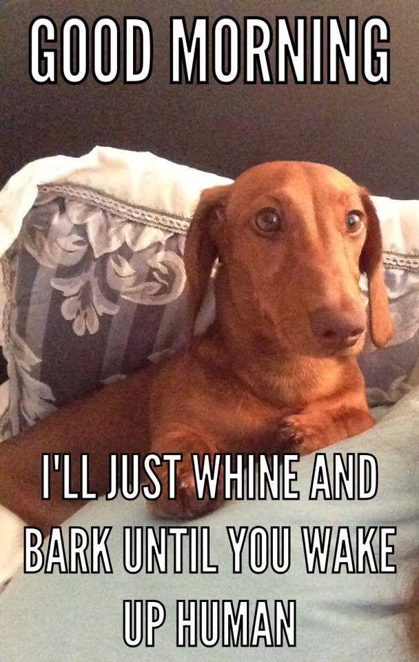 Dachshund Hot Dog Funny