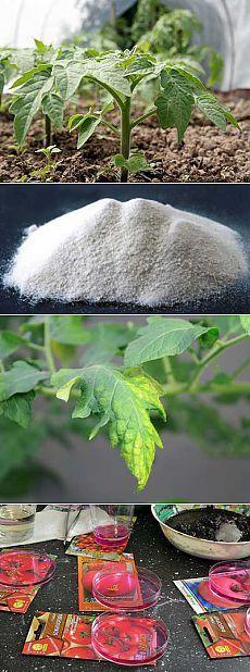 Удобрения под помидоры. В каких удобрениях и микроэлементах нуждаются томаты.   Мое подворье