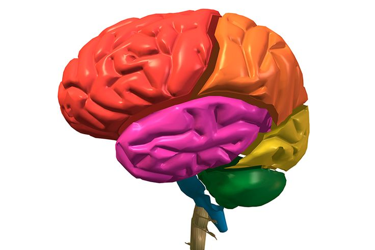 Learn more about the different parts of your brain and how they function, including the cerebrum, cerebellum, and brain stem.