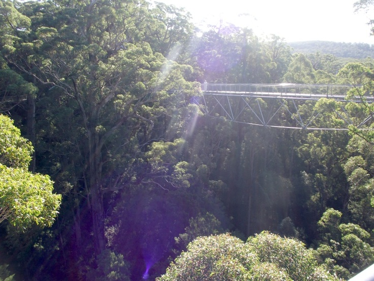 Sun breaking through the Tree Top Walk view - Valley of the Giants, South West WA, Denmark.
