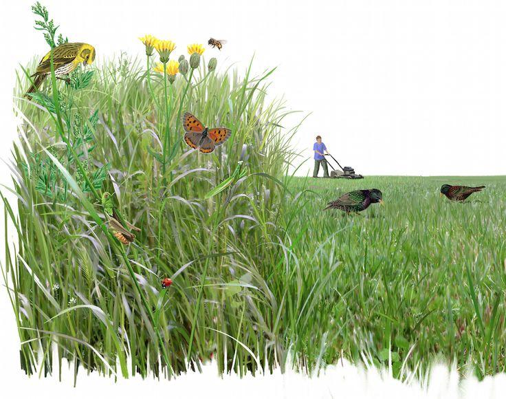 ESPACIOS Y ÁREAS NATURALES.  #RefugiosWN de #fauna y #flora https://refugios.wnature.org/