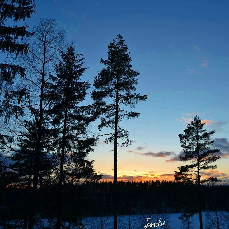 Loc.Korpilahti Finland #sunset #trees #forest #aurikolaskee #hugs_for_trees #pocket_family_member #pocket_trees #ffn_member #fotocatchersmember #harte_ace #tv_allnature #ww_nature_trees #breathaking__snaps #finland_photolovers #lovelyfinland #kings_meteo #photografia_natura #natura_love_ #naturehippys #fiftyshades_of_nature #shotsbyyou #stalking_nature by jaanah14