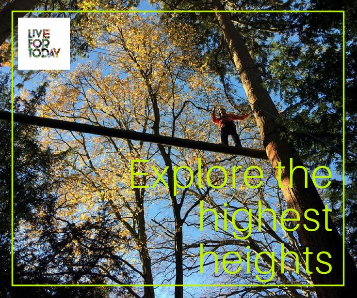 Explore the highest heights at our Harrogate and Kendal Ropes courses. Perfect for parties, birthdays, team building and just for fun!