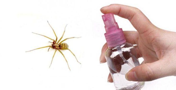 Comment garder les araignées loin de la maison! - Trucs et Astuces - Trucs et Bricolages