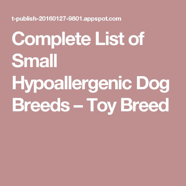 Complete List of Small Hypoallergenic Dog Breeds – Toy Breed