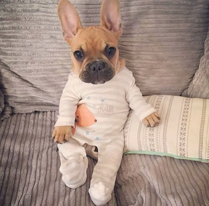 Baby Onesies For Dogs