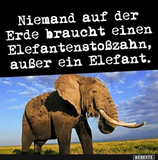 Niemand auf der Erde braucht einen Elefantenstoßzahn.. | Lustige Bilder, Sprüc…