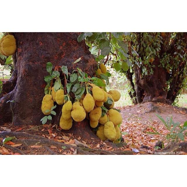 jack fruit are frozen fruits healthy