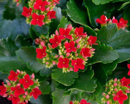 Saksı Çiçeği Bakımı Nasıl Yapılır?