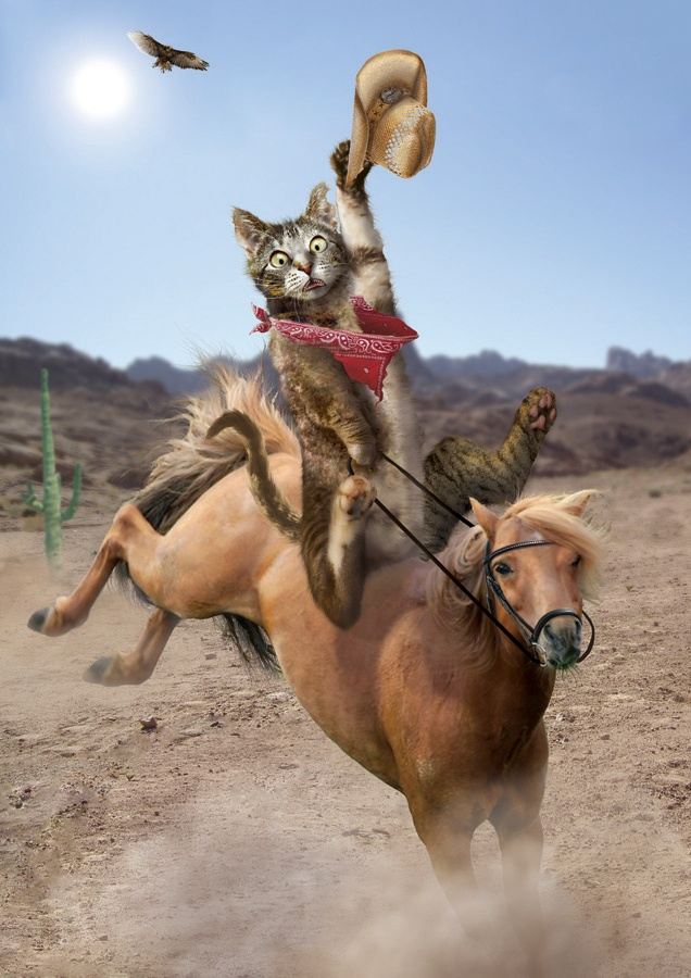Cowgirl riding cowboy-7614