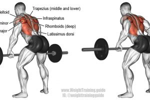 17 best ideas about Ba... Inverted Rows Muscles Worked