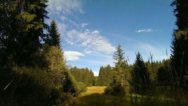 Walk through the Bavarian Forrest