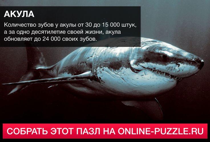 ☝Количество зубов у акулы от 30 до 15 000 штук, а за одно десятилетие своей жизни, акула обновляет до 24 000 своих зубов.