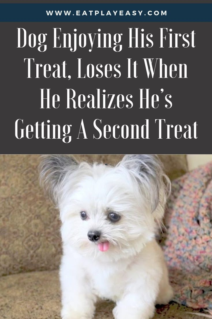 Dog Enjoying His First Treat Loses It When He Realizes He S Getting A Second Treat Therapy Dogs Dogs Big Dog Little Dog