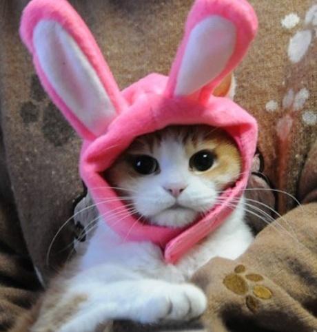 You are a rabbit?o(∩_∩)o