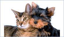 Pour sa santé et s'il est castré, pensez à donner des croquettes pour chat stérilisé à votre matou.