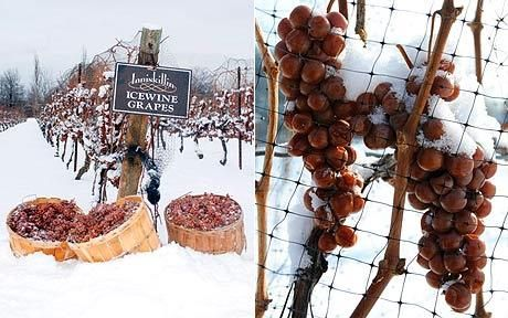Canadian ice wine | bump & run chat