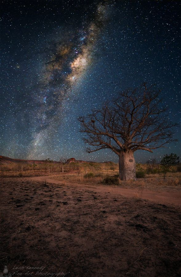 Silent Sky - by Leah Kennedy - (Milky Way over a boab in the Kimberleys, Western Australia.) - Blend of 2 images from the same location, one image exposed earlier in the evening for the foreground/landscape. The 2nd for the night sky. Both images have been blended together in photoshop.