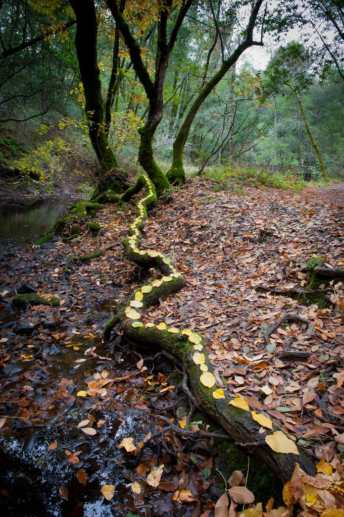 Yellow root | Flickr - Photo Sharing!