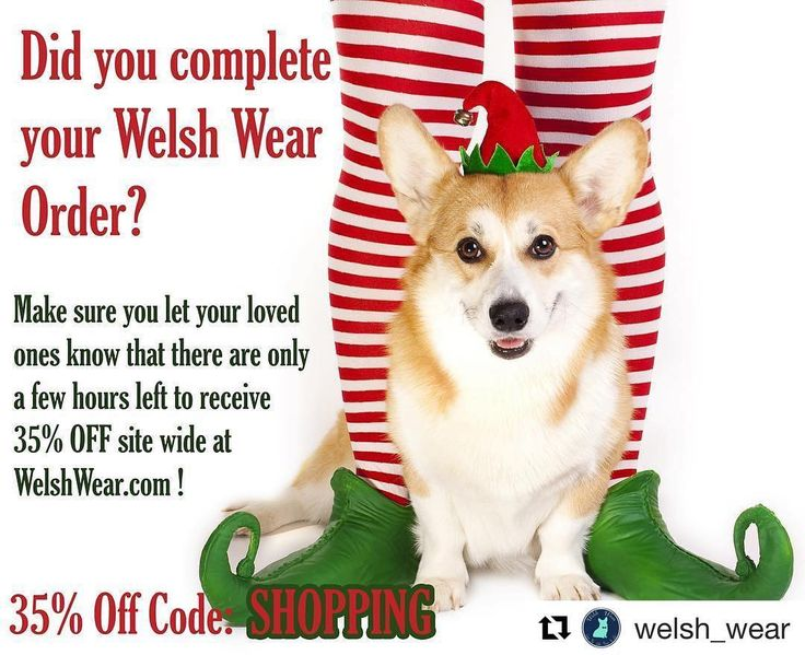Don't run out of time!!! Make sure you complete your order that you started to place and if you would like to unwrap Welsh Wear on Christmas morning let your loved ones know they still have a few hours left to receive 35% OFF Site Wide!!  #repost @welsh_wear   #corgi #corgination #ETLTIL #preppy #equestrian #WelshWeaer #sale #blackfriday #cybermonday #christmas #presents