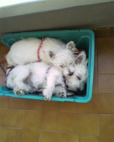 Awww dreaming! From Principessa Luna