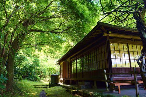 英勝寺は、現在鎌倉に残っている唯一の尼寺。江戸時代には水戸徳川家の姫が代々住職をつとめてきた歴史を持ちます。「花の寺」としても知られ、春は白藤、初夏はあじさい、秋は彼岸花など、四季折々の花々が境内を彩ります。境内の奥に広がる竹林も美しく、散策しているとつい時を忘れ、魅了されてしまう人も多いはず。鎌倉駅からは徒歩圏。ぜひ、気軽に足を延ばしてみませんか?