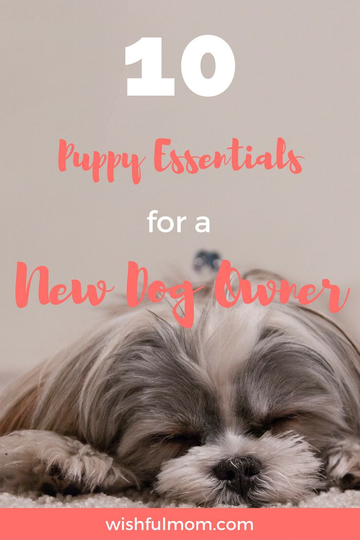 This article is about puppy essentials that a new dog owner needs in order to provide a welcoming home to the new addition of the family.
