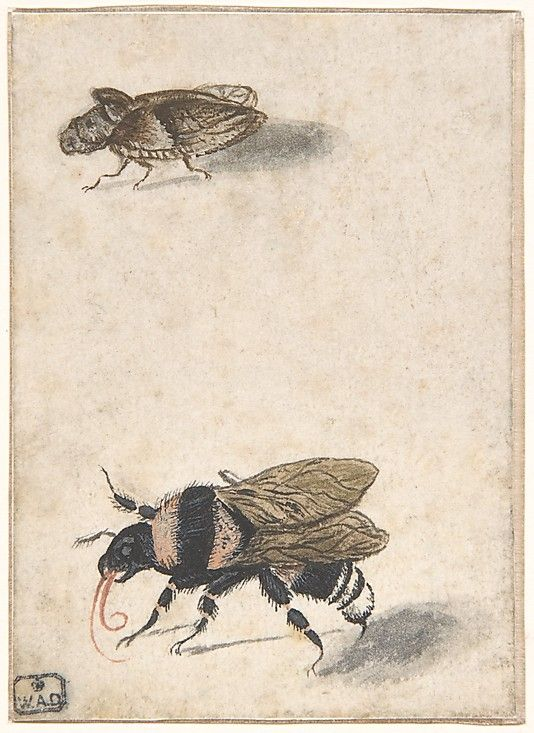 A Bumble Bee and a Fulgoroid  Anonymous, Dutch, 17th century
