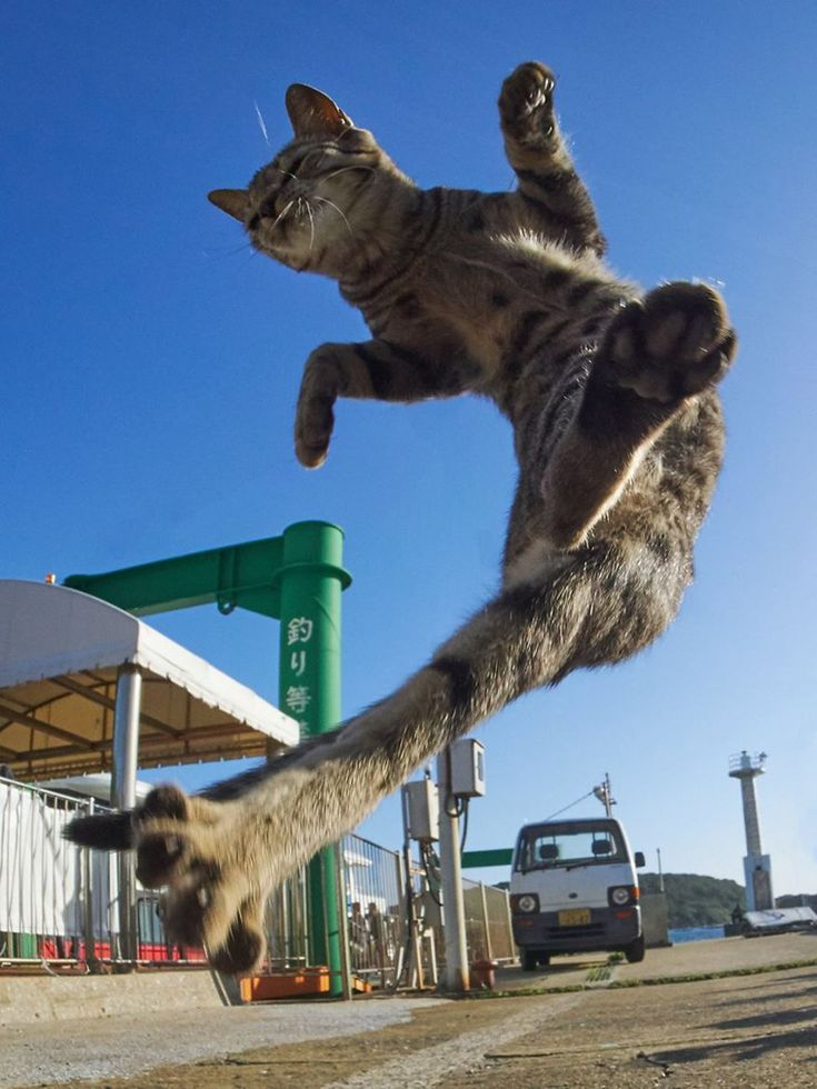 These Ninja Cats Are Just Too Purrrfect!