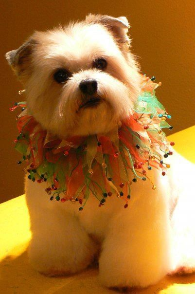 49 best pet space images on pinterest kennel ideas dog grooming skeeter grooming by chris sertzel solutioingenieria Images