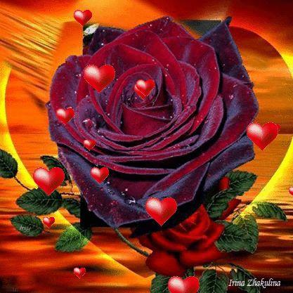 tolles die magie der bulgarischen rose kollektion bild und efadebdcfdaeffcfdb animation