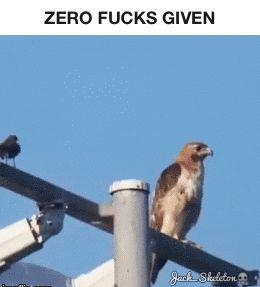 Hahah :) GIF
