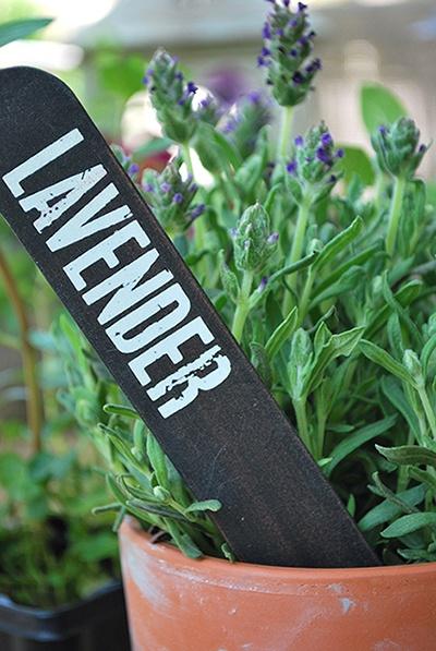47 Best Images About School Lettuce Garden On Pinterest